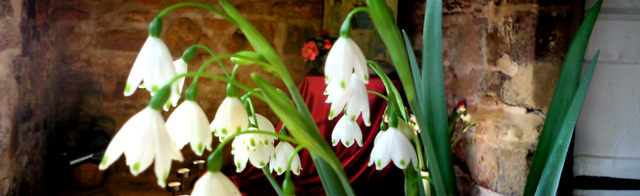 Snowdrops in the main lounge